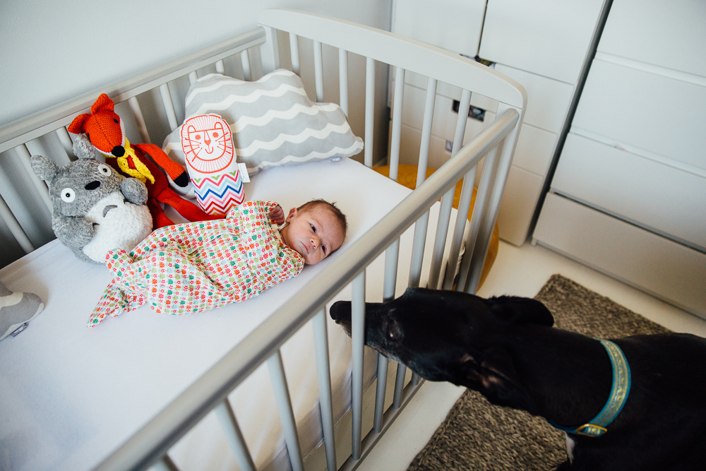 NEWBORN BABY GIRL IN COT WITH DOG, KENT PHOTOGRAPHER