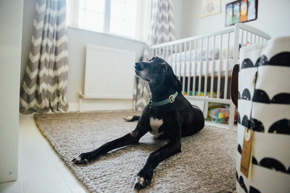 FAMILY DOG IN NEWBORN BABY'S NURSERY FAMILY PHOTOGRAPHER KENT