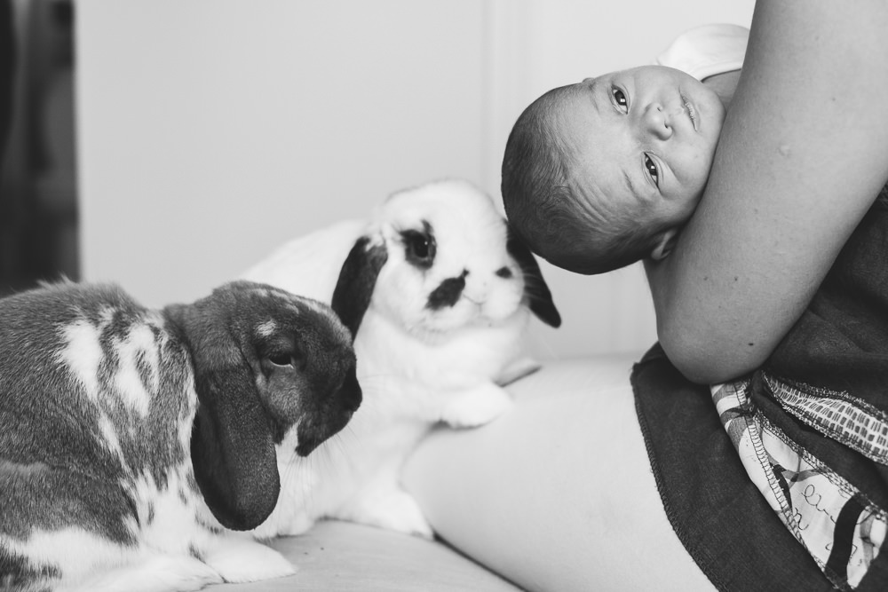 BABY WITH HOUSE BUNNIES ON BED KENT NEWBORN PHOTO SESSION