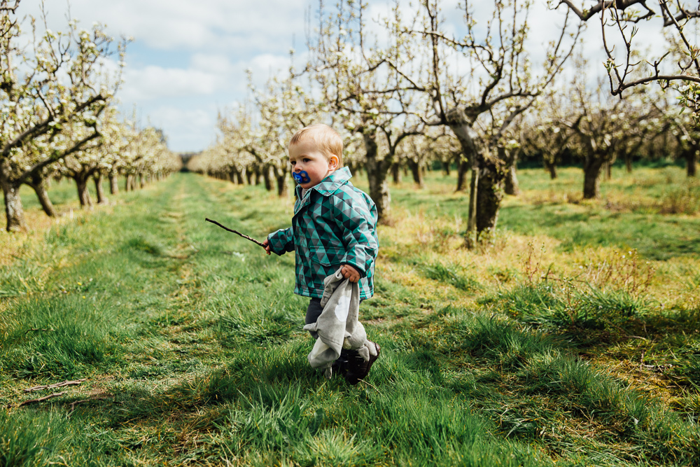 boys in blossom trees playing farm canterbury kent family photographer