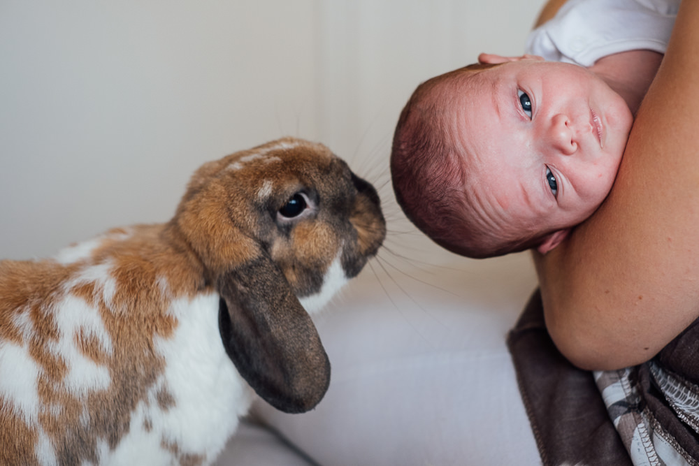 BABY WITH HOUSE BUNNY ON BED KENT NEWBORN PHOTO SESSION