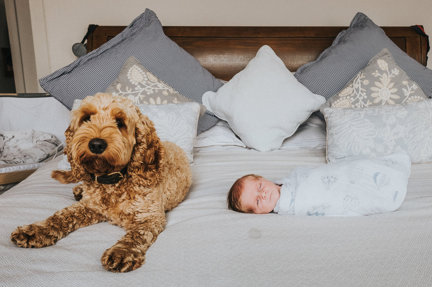DOG AND NEWBORN BABY ON BED FULHAM NEWBORN PHOTOGRAPHER