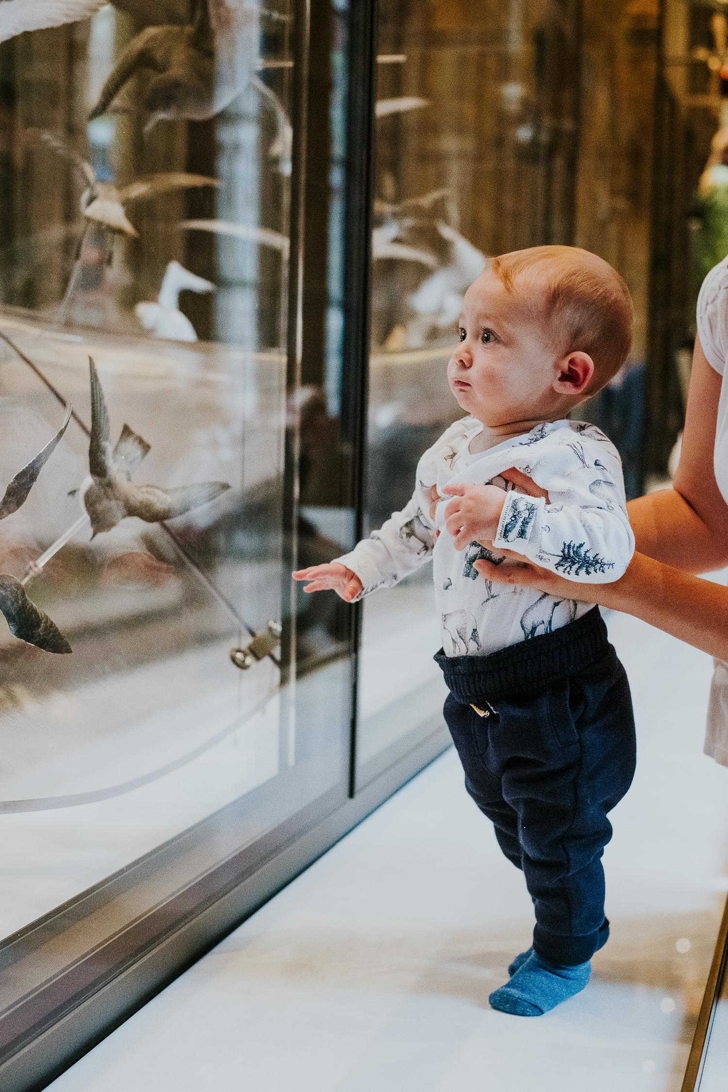 couple with baby son looking at birds at the natural history museum family photography