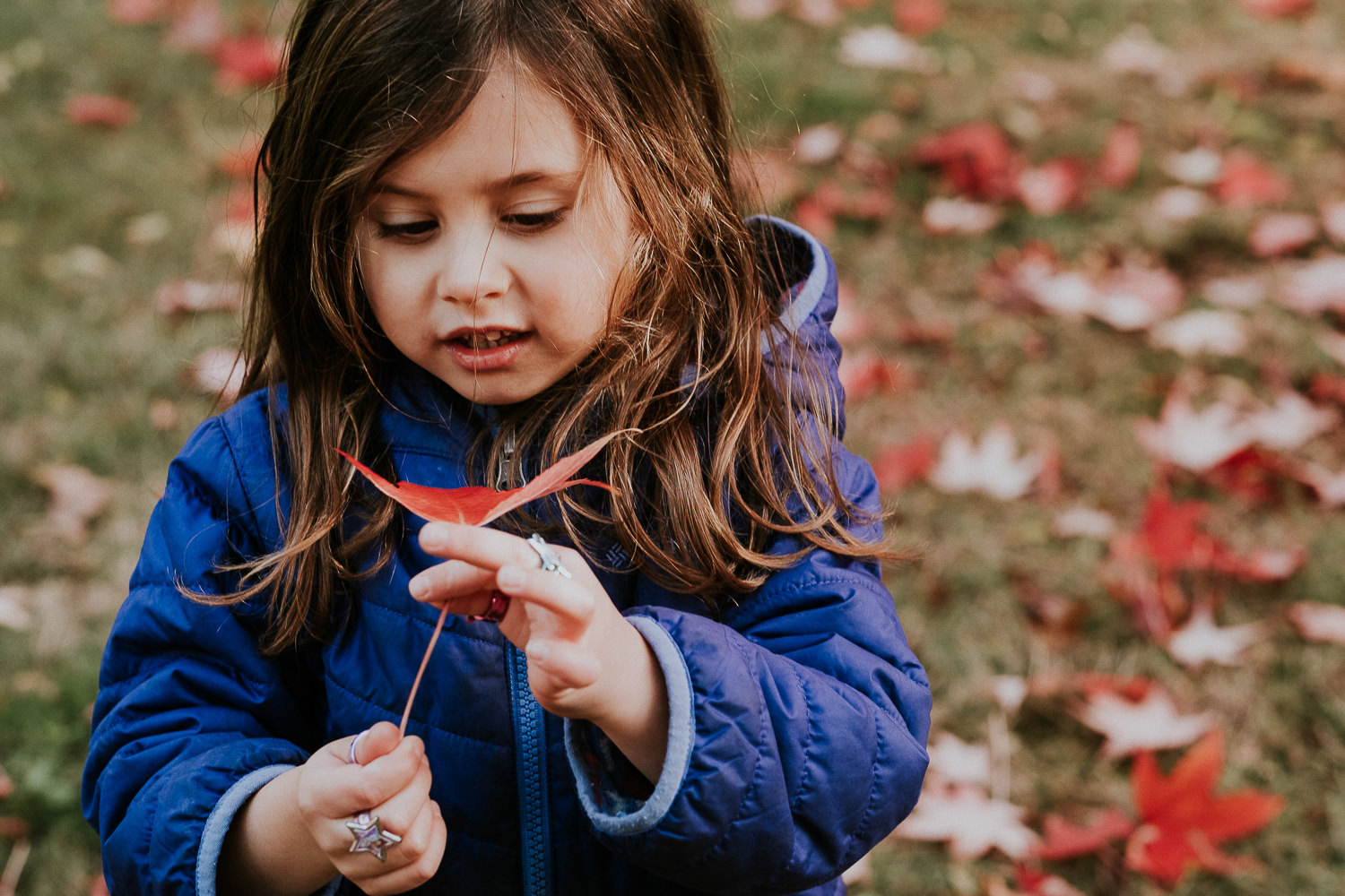 notting hill family photographer young girl in park with colourful autumn leaves