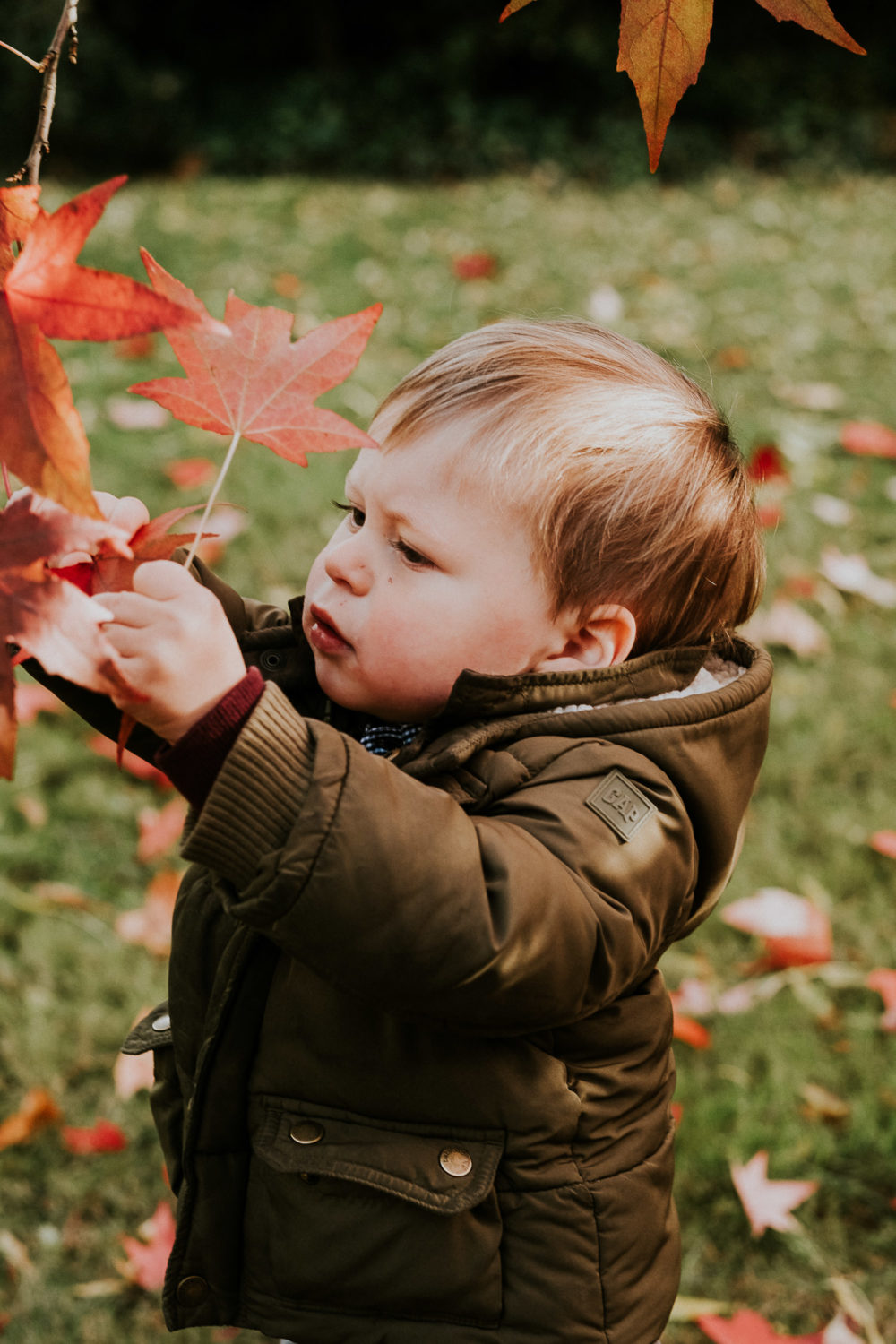 notting hill family photographer toddler boy in park with colourful red autumn leaves