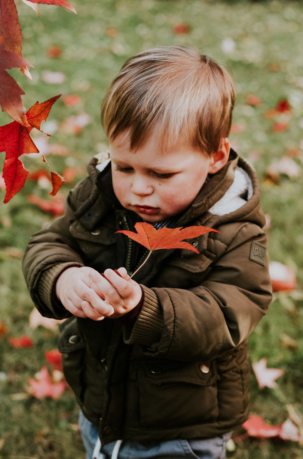 notting hill family photographer young boy in park with colourful red autumn leaves