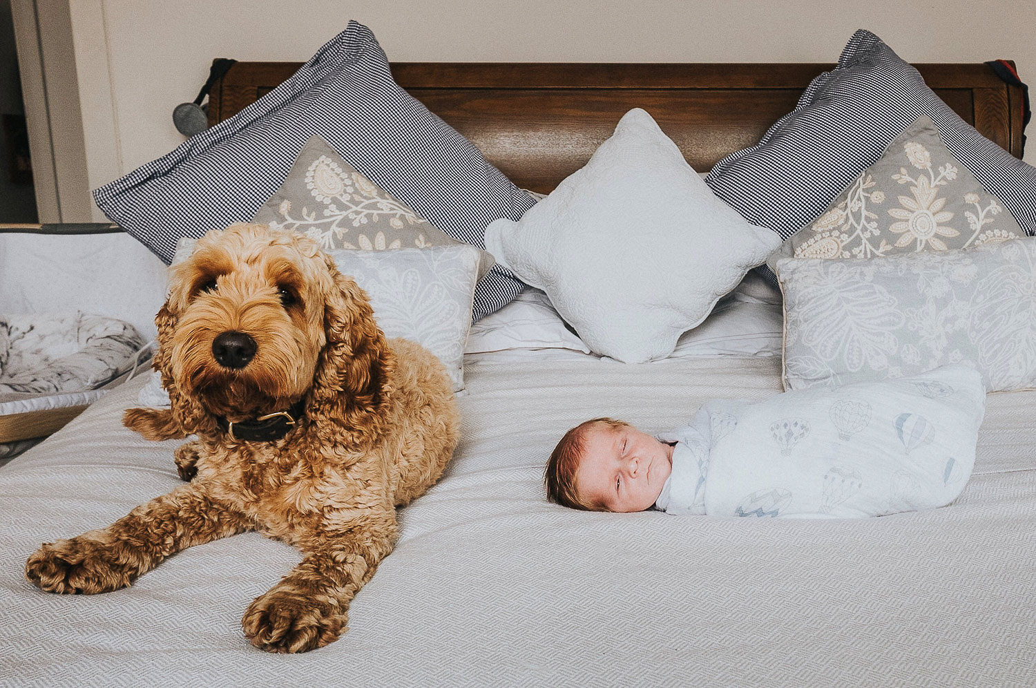 Dog with newborn baby photo shoot at home