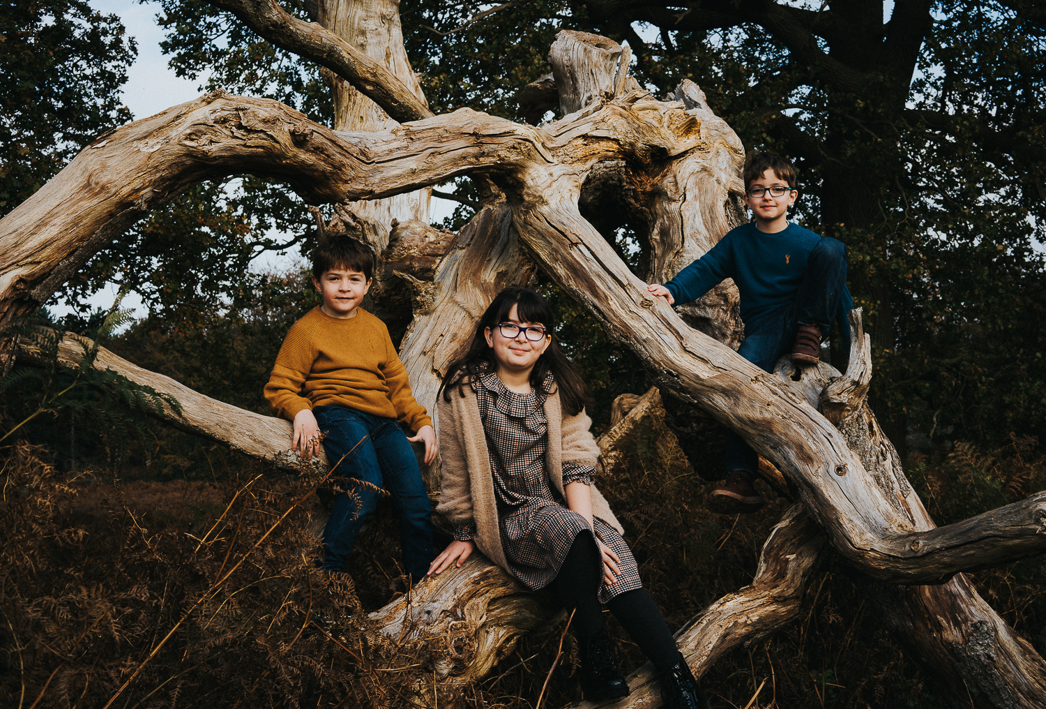 Ashford family photography 2020 three siblings sitting in large tree
