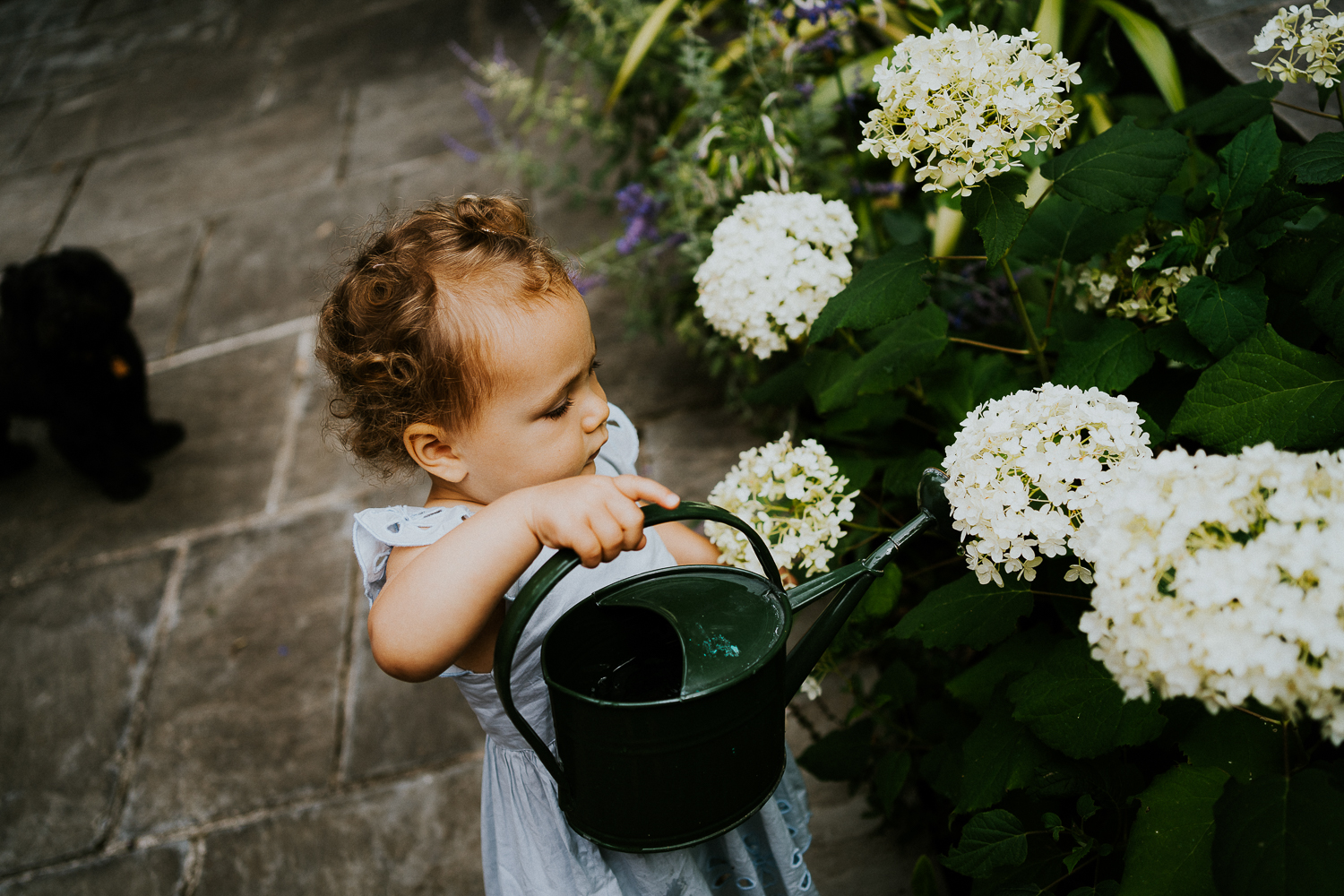 NORTH KENSINGTON FAMILY PHOTO SESSION toddler girl watering flowers in garden at home